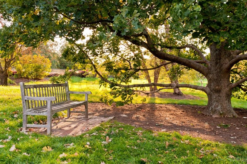 5195813-bench-and-oak-tree-in-city-park-in-the-autumn